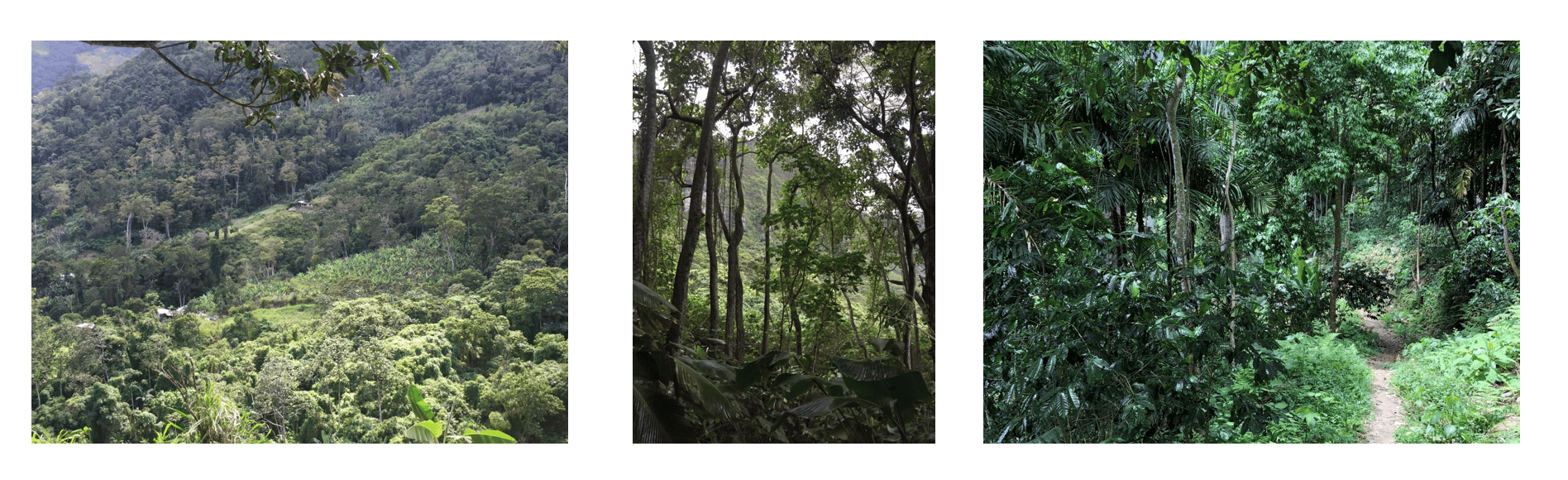Tropical dry forests and shade-coffee forests in the Cordillera de la Costa, Venezuela